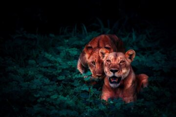 cameras for wildlife photography